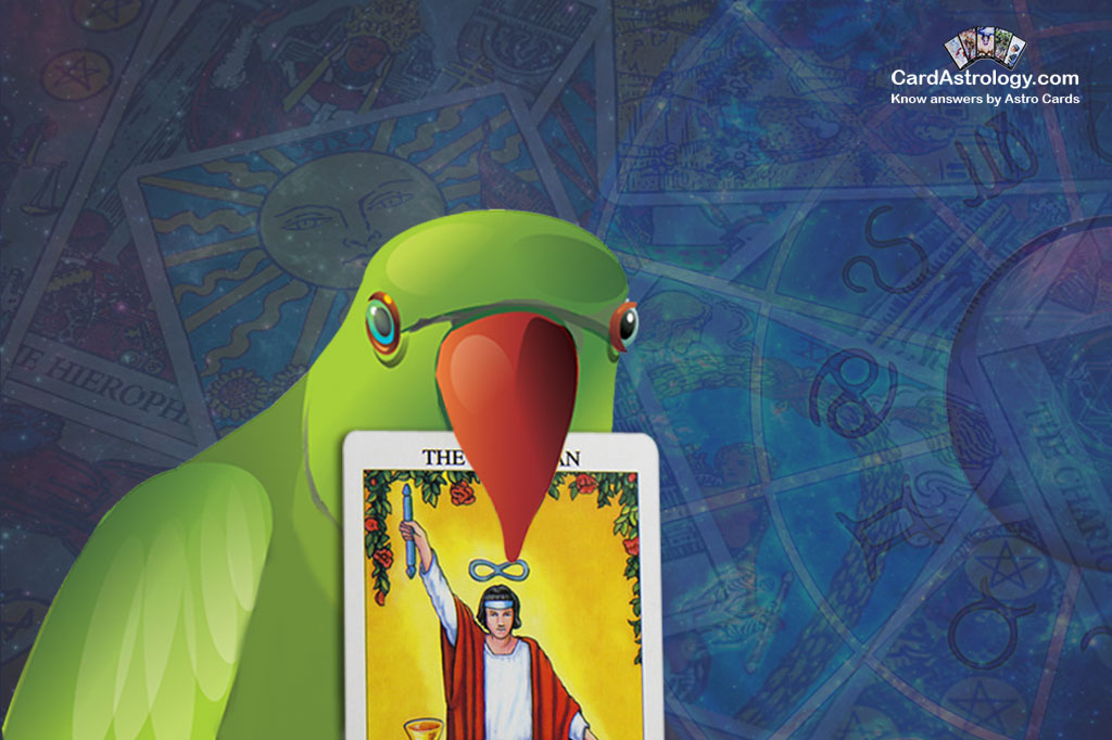 Need to take advantage of mystic forces with the parrot?